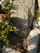Rock Climbing Photo: Base of the anchor block, horn to right (with hand...