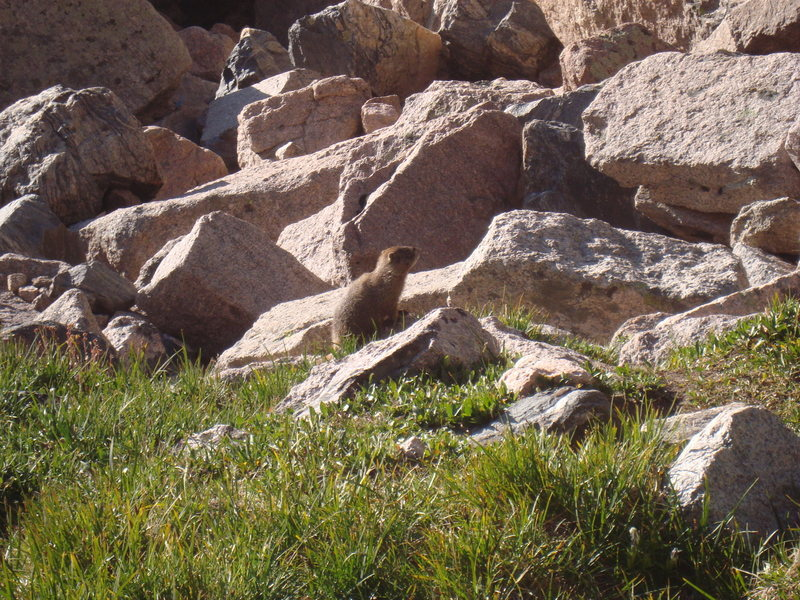 Rock Climbing Photo: Those Marmots are HUGE!!