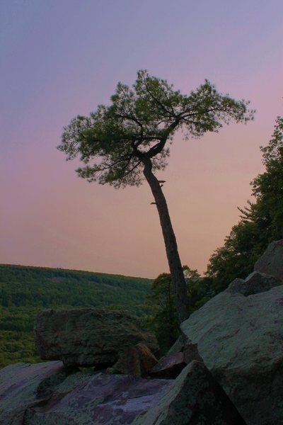 Rock Climbing Photo: I've always wanted to catch this tree in good ligh...