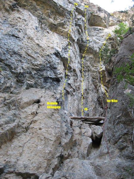 Rock Climbing Photo: Routes at the Bingo Baby Wall