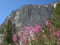 Rock Climbing Photo: patricia bowl