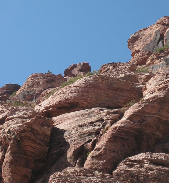 A Bighorn spotted far off in the distance. Look closely, (upper left hand corner) and you'll see him on the ledge.<br> <br> Kraft Mt. 9/7/09