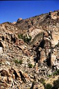Rock Climbing Photo: If I remember right this is Lost Palm Oasis near C...