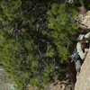 First Ascentionist Bruce Holthouse on his Clean Green Dream<br> <br> Image courtesy of andrewburr.com.  All rights reserved.