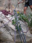 Rock Climbing Photo: Haulin it.