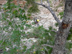 Rock Climbing Photo: The third tree rappel down the gulley. Difficult t...