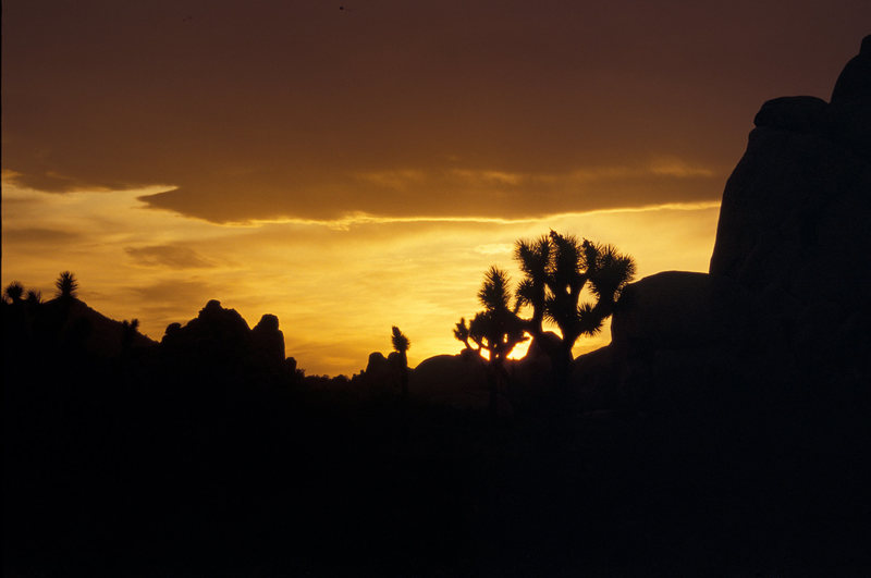 Rock Climbing Photo: Joshua Tree sunset