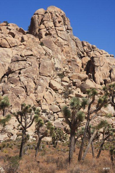 Rock Climbing Photo: Hidden Dome from the valley floor