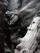 Rock Climbing Photo: Pine Creek, Zion. There was only John, and I, and ...