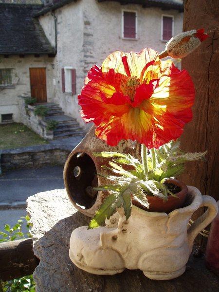 Rock Climbing Photo: Plastic flower on the porch, Acquarossa, CH
