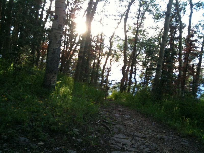 Rock Climbing Photo: yay more cougar pics