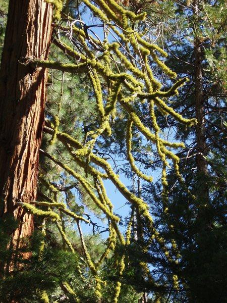 my favorite moss