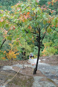 Rock Climbing Photo: The leaves are starting to get some color... And m...