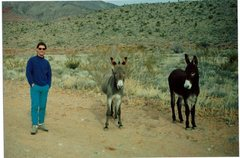 Rock Climbing Photo: Jim Ganske standing next to wild burros in Red Roc...