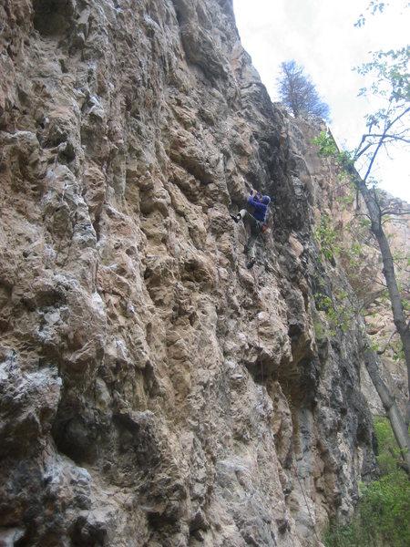 Rock Climbing Photo: Sunny on lead.