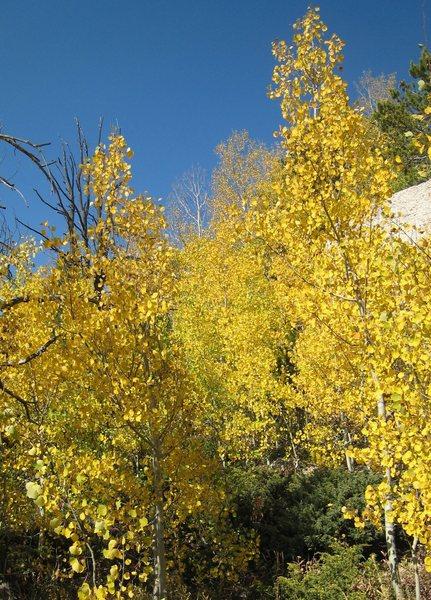 Fall foilage at the Main Wall.