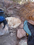 Rock Climbing Photo: Tired pup in LDE