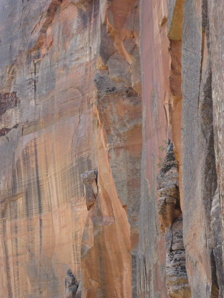 Falcon watches us climb.