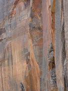 Rock Climbing Photo: Falcon watches us climb.