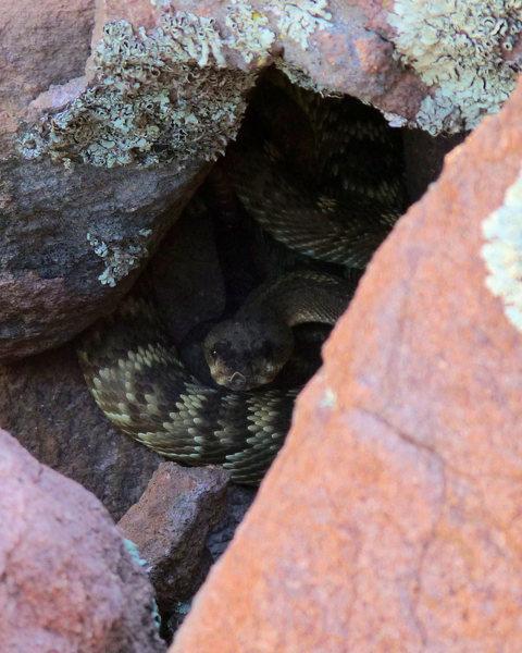 Rock Climbing Photo: Fall in LDE