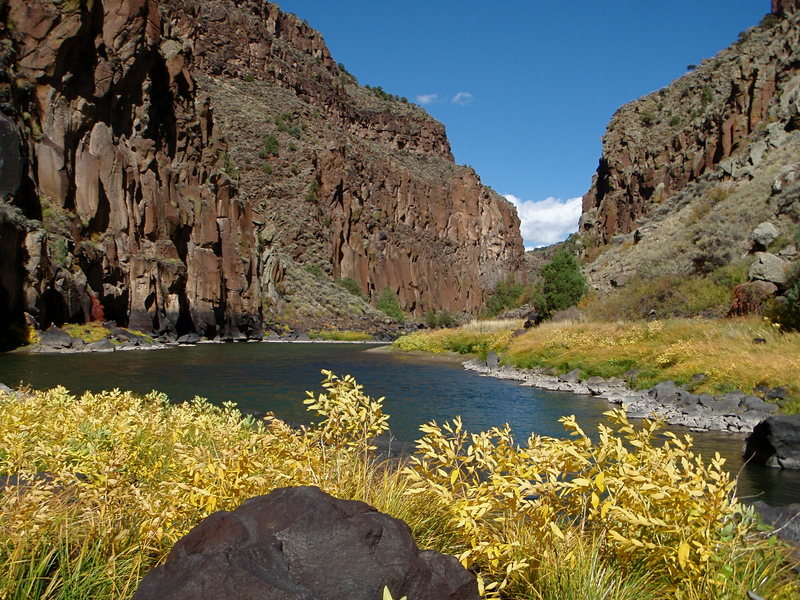 Rock Climbing Photo: Fall colors along the Rio Grande.