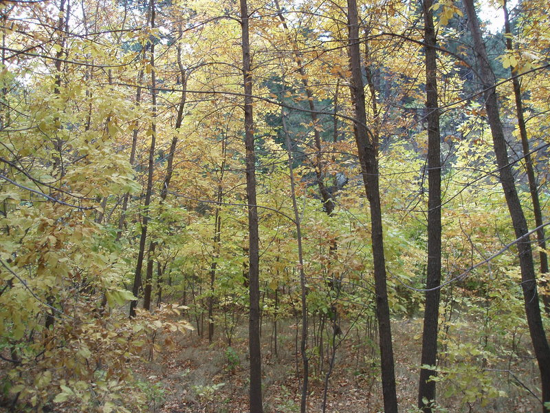 A little fall foliage below the Flatirons...