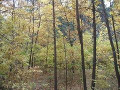 Rock Climbing Photo: A little fall foliage below the Flatirons...