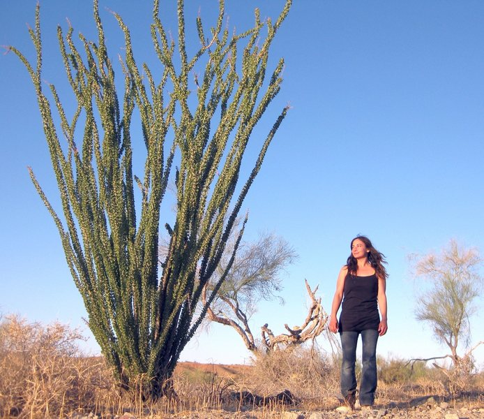 Admiring the gynormous size of the Ocotillos while exploring the historical Bradshaw Trail.<br> <br> 10/7/09