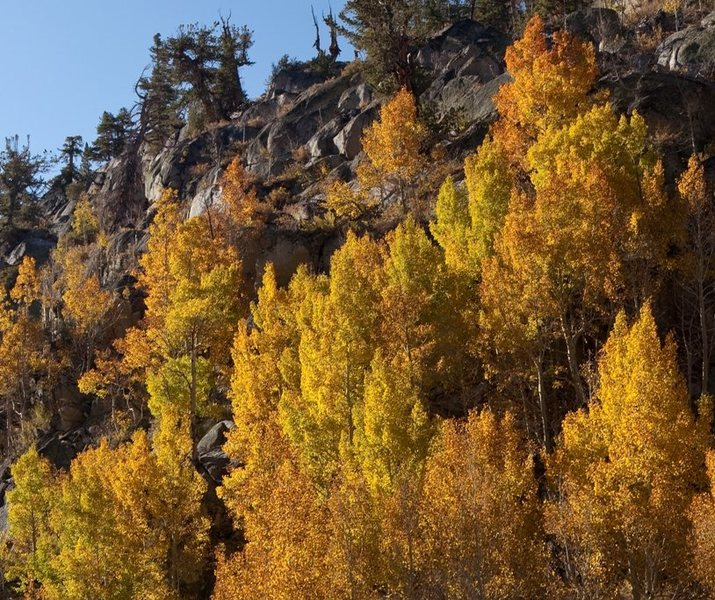 Rock Climbing Photo: Aspens on the slopes above South Lake Road