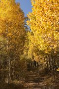 Rock Climbing Photo: Aspens along South Fork