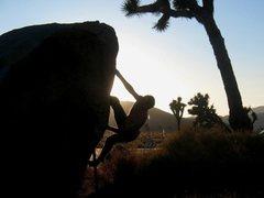 Rock Climbing Photo: French Roast (V2), Joshua Tree NP