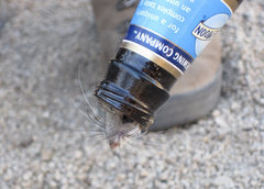 Rock Climbing Photo: Kangaroo Rat stuck in a beer bottle. You'll see th...