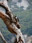 Rock Climbing Photo: Not sure what this was, pretty cool looking bird. ...