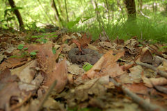 Rock Climbing Photo: Another Copperhead from the 2009 season.  Ohiopyle...