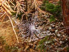 Rock Climbing Photo: Pretty neat frozen spiderweb, in the Flatirons, Oc...