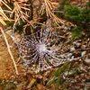 Pretty neat frozen spiderweb, in the Flatirons, October '09.