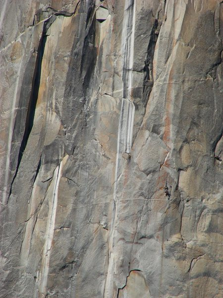 Climbers on El Cap, Sept 30, 2009. If this is you, PM me and I'll send you some shots.