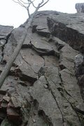 Rock Climbing Photo: You can see the first bolt to the right of the tre...