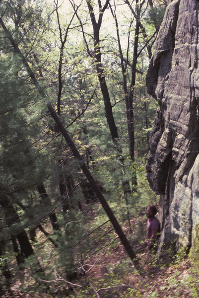 "Mark Wenzel felling the ""cheat tree"" at the stat of what we then called Chucklehead Crack.  River side of cliff.  1985."