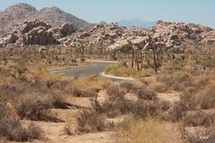 Rock Climbing Photo: Winding road through Joshua Tree