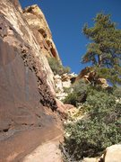 Rock Climbing Photo: The beautiful slanted tree, and a bit of pocketed,...