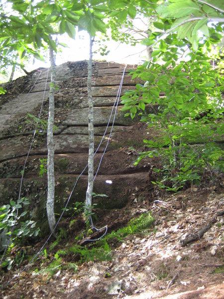 Climb thru the trees to the top
