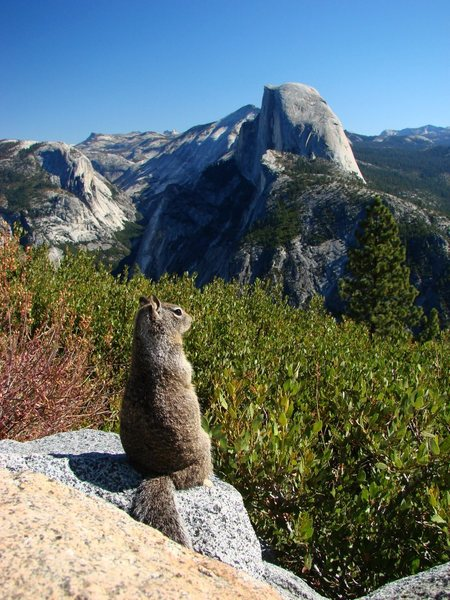 A squirrel with a view.  We were laughing about the tourists from other countries taking pics of rodents, and then there I was...  September 2009.