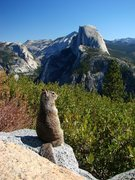 Rock Climbing Photo: A squirrel with a view.  We were laughing about th...