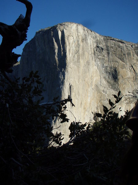 Rock Climbing Photo: El Capitan as seen from the East Buttress of Middl...