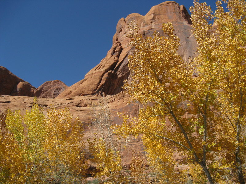 Rock Climbing Photo: The King's Hand as viewed from the Jaycee Campgrou...