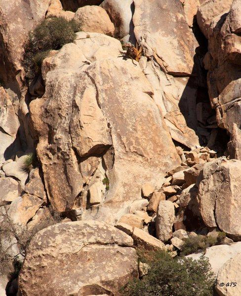 Rock Climbing Photo: Baby Roof Rock