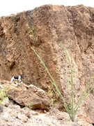 Rock Climbing Photo: The Split Boulder.