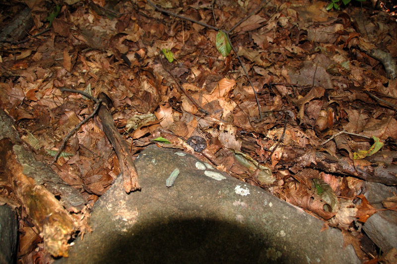 Find the small Copperhead laying in the leaves.  Just one of the numerous Copperheads we've seen here.