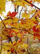 Rock Climbing Photo: fall colors